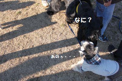 f0197317_10315474.jpg
