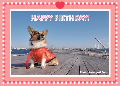 アタ坊ちゃん、お誕生日おめでとう♪_d0102523_12221456.jpg