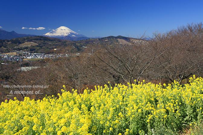 吾妻山公園からの眺め!_d0143741_23382638.jpg