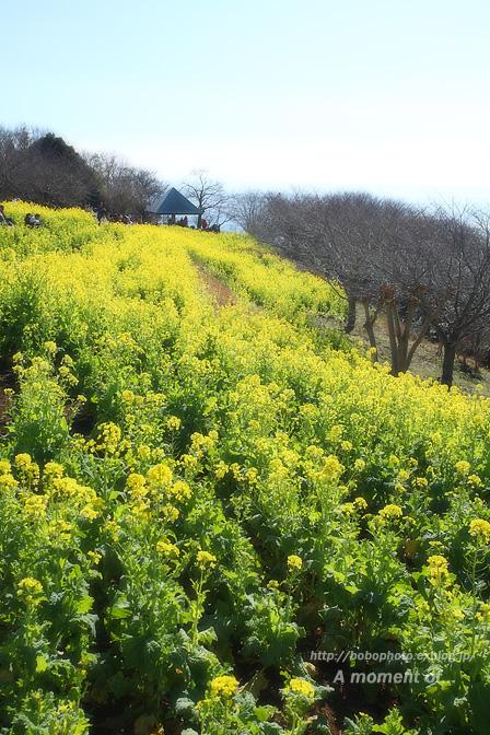 吾妻山公園からの眺め!_d0143741_2338469.jpg