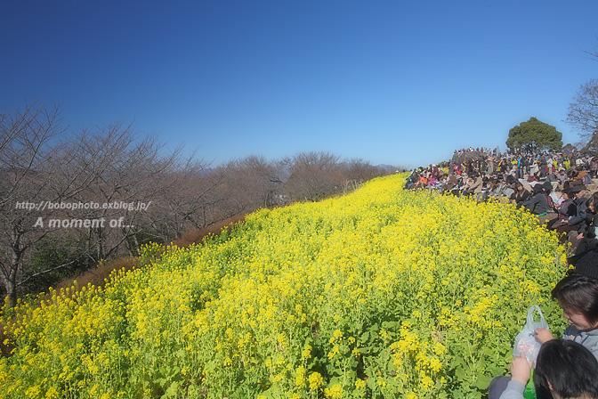 吾妻山公園からの眺め!_d0143741_23385115.jpg