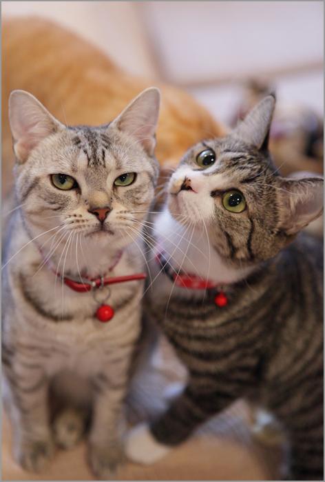 猫カフェの猫のきもち_d0101050_12294957.jpg
