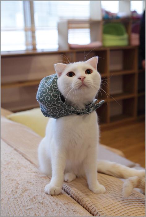 猫カフェの猫のきもち_d0101050_12304338.jpg