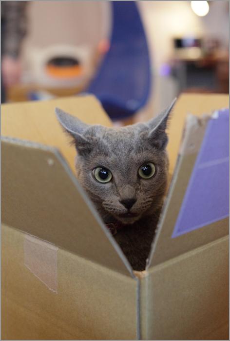 猫カフェの猫のきもち_d0101050_1231850.jpg
