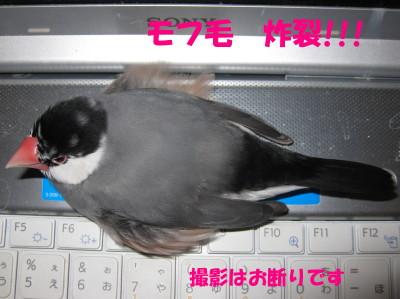 b0158061_20305272.jpg