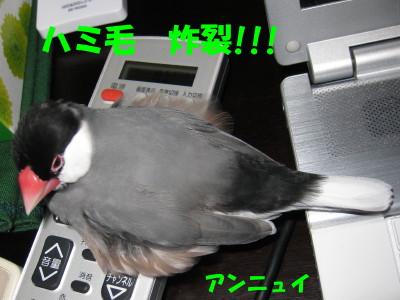 b0158061_2031367.jpg