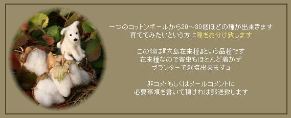 c0180182_1429657.jpg
