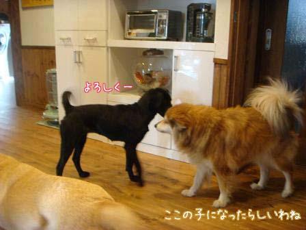 f0064906_20111544.jpg