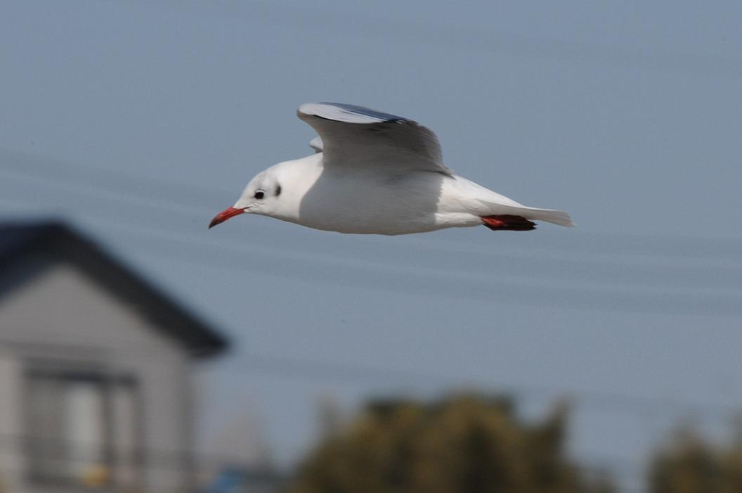 飛   翔 No.93_d0039021_18362935.jpg