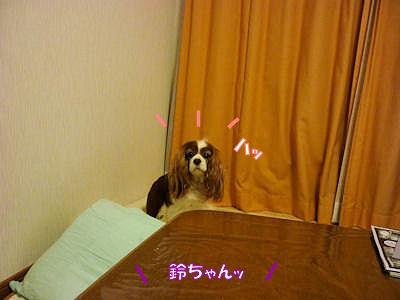 b0185323_1732365.jpg