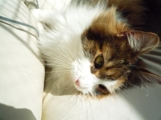 ソファと猫_f0181924_212116.jpg