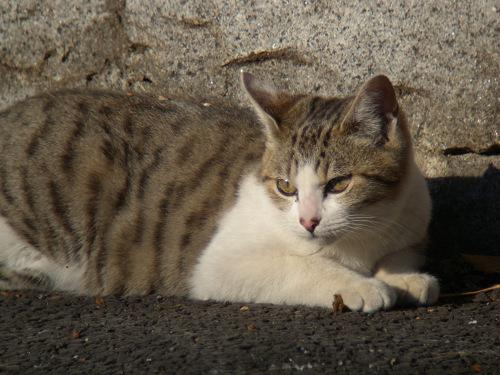 ボーグで猫を撮ってみた(5枚+10枚)_e0089232_0101541.jpg
