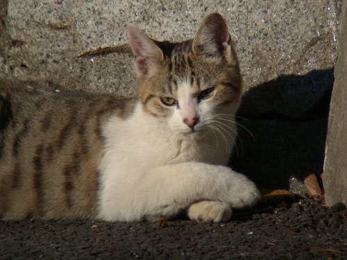 ボーグで猫を撮ってみた(5枚+10枚)_e0089232_0102196.jpg
