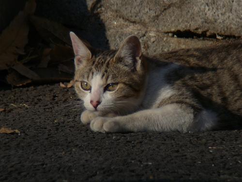 ボーグで猫を撮ってみた(5枚+10枚)_e0089232_010327.jpg