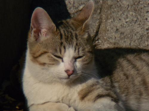 ボーグで猫を撮ってみた(5枚+10枚)_e0089232_010520.jpg