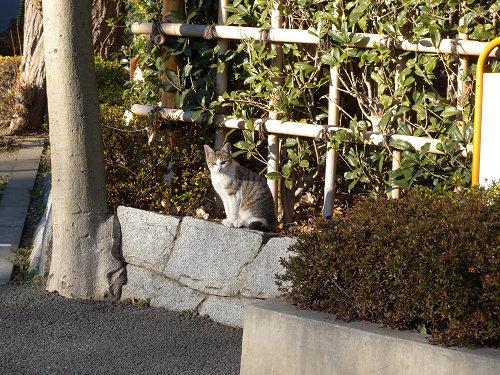 ボーグで猫を撮ってみた(5枚+10枚)_e0089232_063923.jpg