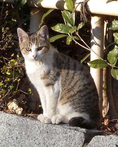 ボーグで猫を撮ってみた(5枚+10枚)_e0089232_065369.jpg