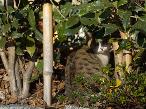 ボーグで猫を撮ってみた(5枚+10枚)_e0089232_07135.jpg