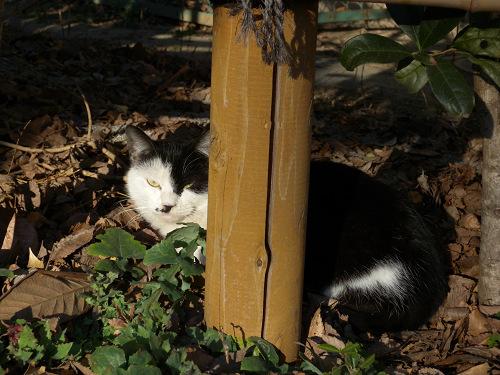 ボーグで猫を撮ってみた(5枚+10枚)_e0089232_07154.jpg