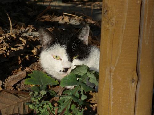 ボーグで猫を撮ってみた(5枚+10枚)_e0089232_072327.jpg
