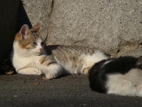 ボーグで猫を撮ってみた(5枚+10枚)_e0089232_092921.jpg