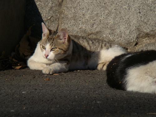 ボーグで猫を撮ってみた(5枚+10枚)_e0089232_09363.jpg