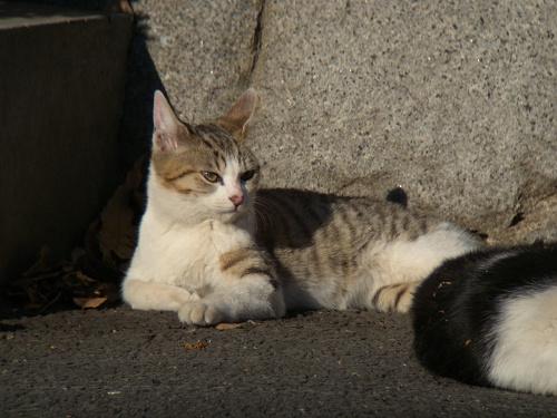 ボーグで猫を撮ってみた(5枚+10枚)_e0089232_094716.jpg