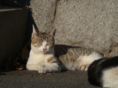 ボーグで猫を撮ってみた(5枚+10枚)_e0089232_095368.jpg