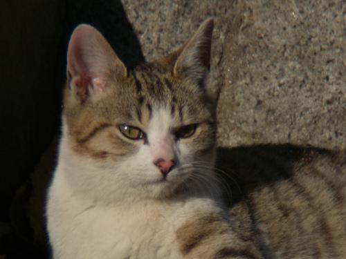 ボーグで猫を撮ってみた(5枚+10枚)_e0089232_095920.jpg