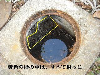 f0031037_216593.jpg