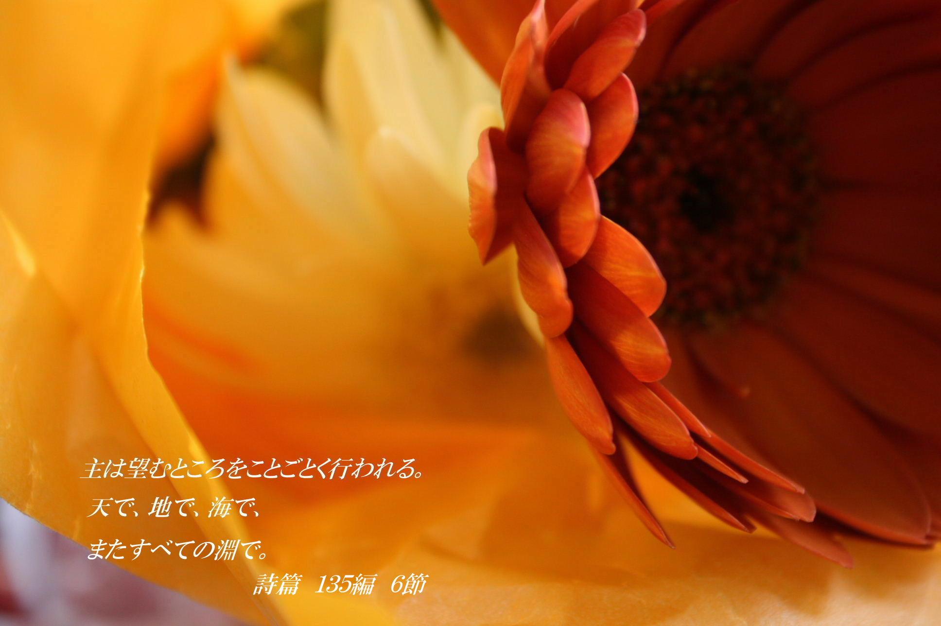 f0067044_1759201.jpg