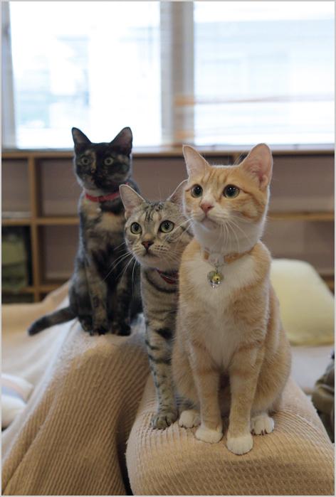猫カフェの猫のきもち_d0101050_1283721.jpg