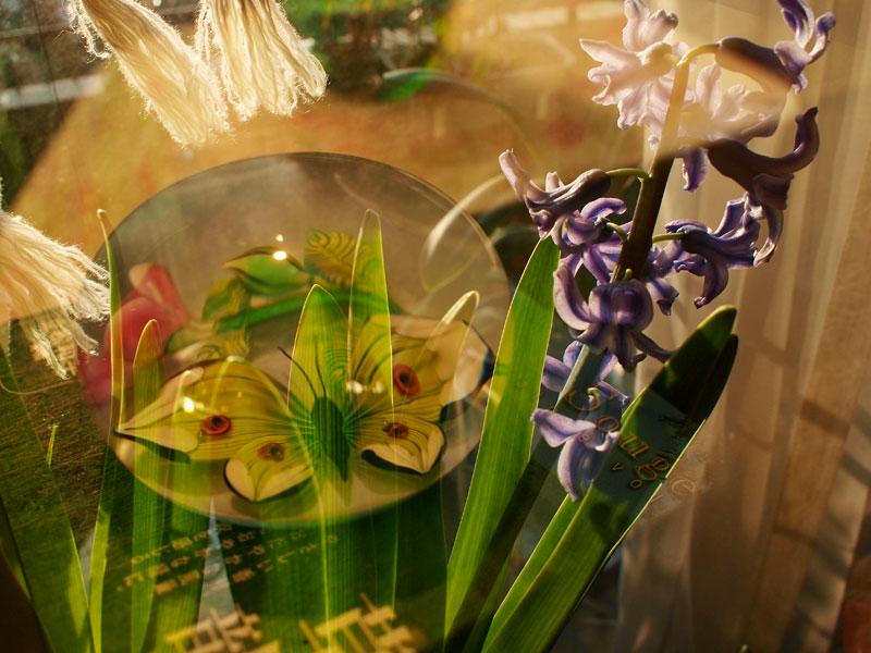 春になる前にうとうとうと、、、、と春眠です_a0031363_17385845.jpg