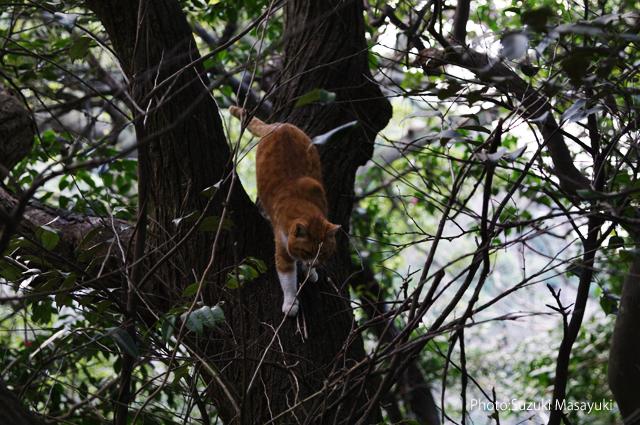 その崖の上から駆け寄る茶トラ猫に。。_b0174465_7163326.jpg