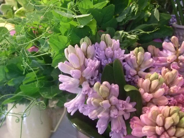 オークリーフ(花の色)_f0049672_16571920.jpg