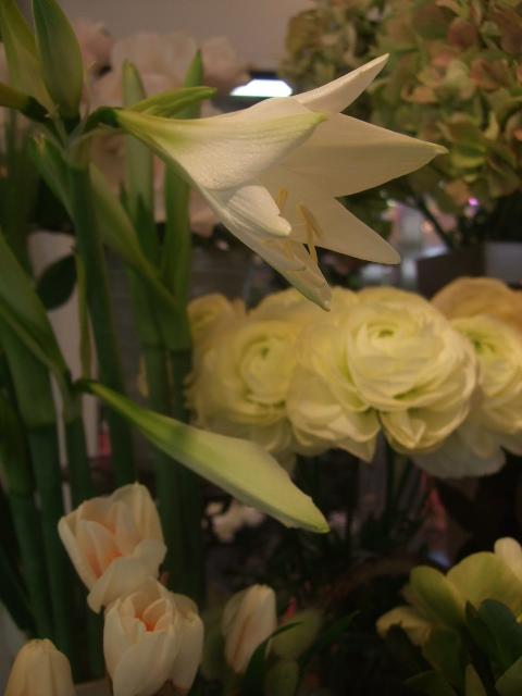 オークリーフ(花の色)_f0049672_16573773.jpg