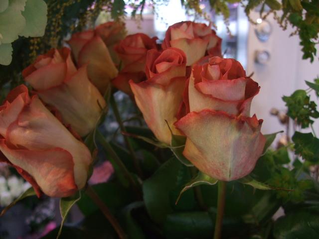 オークリーフ(花の色)_f0049672_1658252.jpg