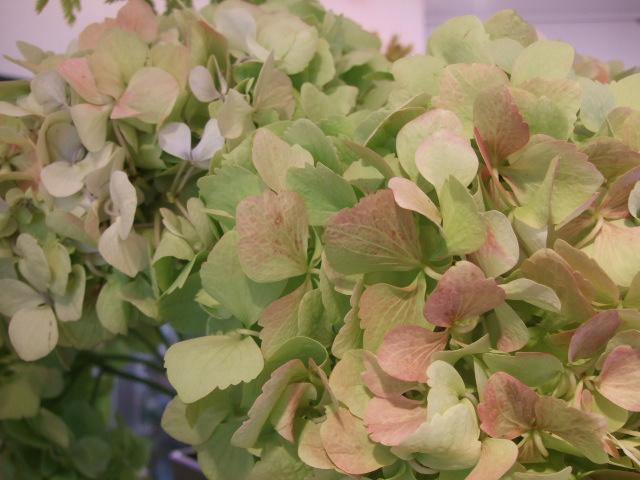 オークリーフ(花の色)_f0049672_16585766.jpg