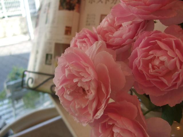 オークリーフ(花の色)_f0049672_1701428.jpg