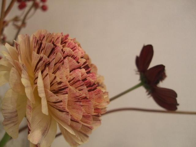 オークリーフ(花の色)_f0049672_1712714.jpg