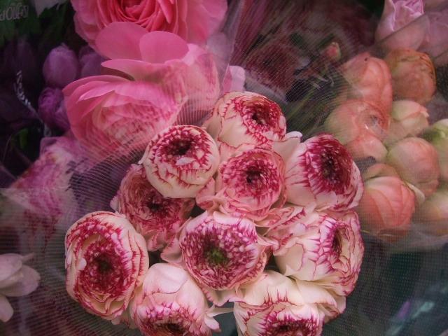 オークリーフ(花の色)_f0049672_1715787.jpg