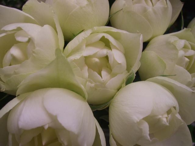オークリーフ(花の色)_f0049672_17275.jpg