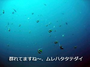 f0144385_034718.jpg