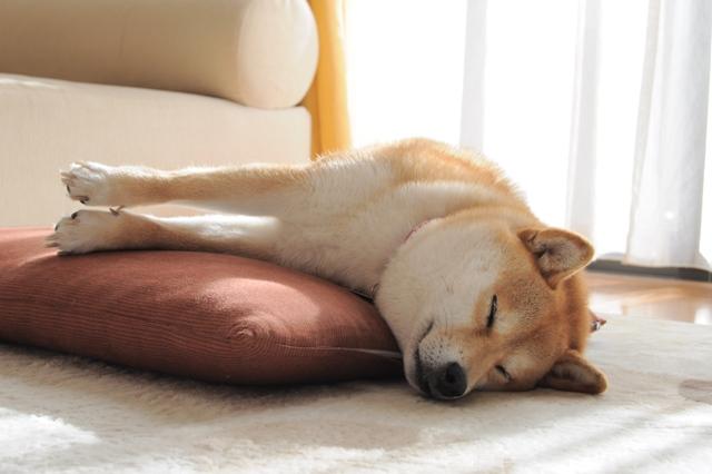 かぼちゃんの寝顔_a0126590_042060.jpg