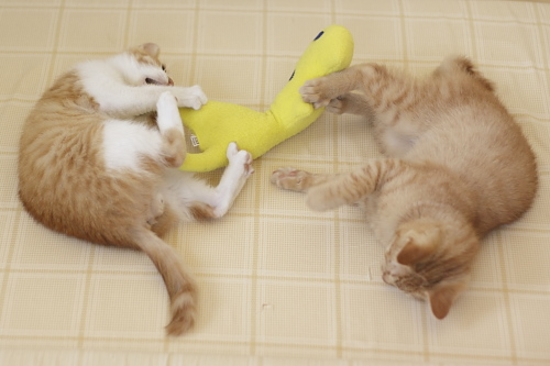 黄猫さんを奪い取ろうとする澪っち