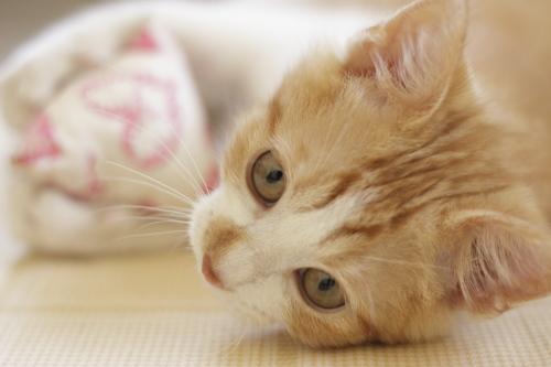 黄猫さんを奪われて、テトラを抱える澪っち