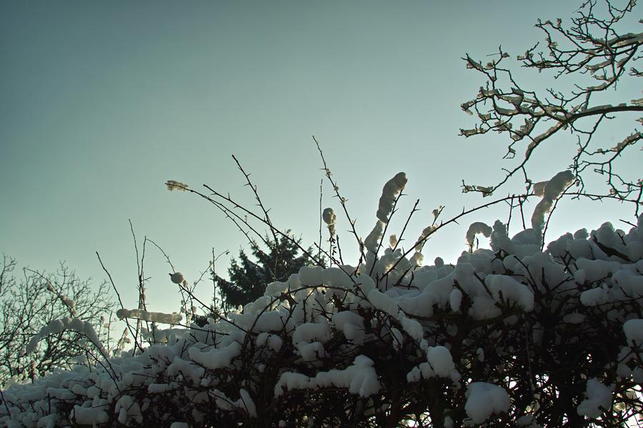 白い芋虫たち_b0148617_1734031.jpg