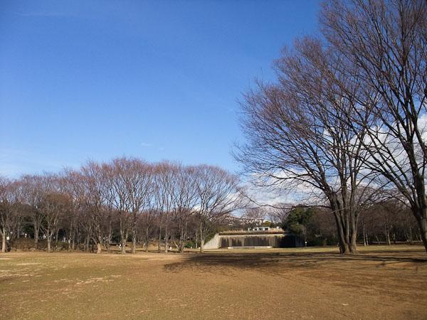 @茅ヶ崎中央公園_f0077521_841535.jpg