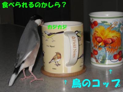 b0158061_1955119.jpg
