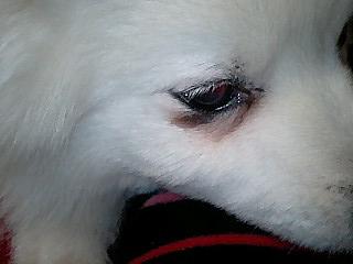 犬の歯槽膿漏_e0159969_19174171.jpg